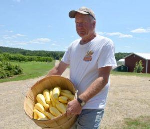 Ashford, shows some of the yellow squash at the farm. Aaron Flaum/ NorwichBulletin.com